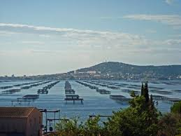 Image result for Meze, Herault