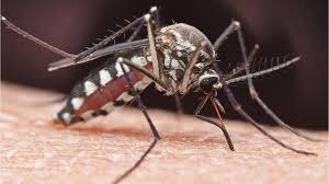 Deadly mosquito-borne EEE virus outbreak in Massachusetts may ...