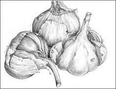 <b>pencil drawings</b> of fruit and vegetables - Google Search | Vegetable ...