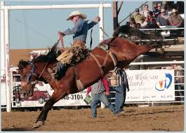 Image result for rodeo