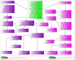 bacteria identification flow chart unknown microorganisms bacteria identification flow chart unknown microorganisms create flow chart online