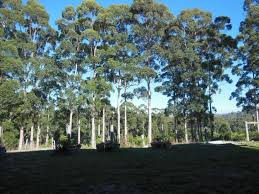 House / Apartment / Other Blue <b>Moon Forest</b> Lodge (manjimup ...