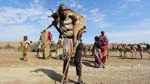 Hunger to hit emergency levels in Ethiopia despite rains   Economic ...
