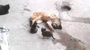 Mother cat with kittens came to old <b>friend</b> / Кошка привела котят к ...