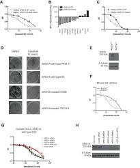 synthetic lethal targeting of arid1a mutant ovarian clear cell figure