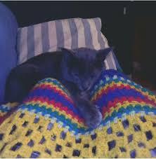 <b>Men's Cute</b> Cat Lovely <b>Pet Print</b> 3D Hoodie Casual #pillowdrawing ...