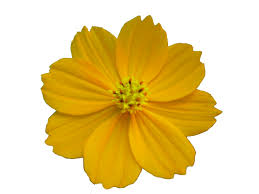 Image result for flower png