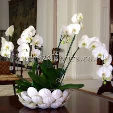 day orchid decor: new inspiring selection of flower arrangements from uk
