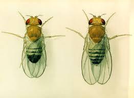 bathroom fruit flies