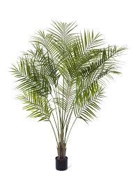 <b>Пальма</b> Арека Новая | <b>Пальмы</b>, Зимний сад, Искусственные ...