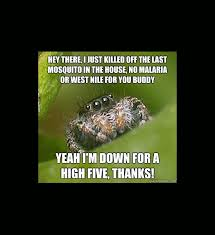 Misunderstood Spider: A Hilarious Meme Gallery via Relatably.com