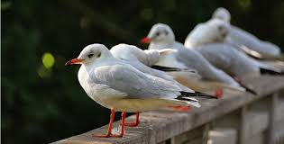 GOOD <b>LUCK</b>?! Why Bird <b>Poop</b> is a Sign of Hope in Disguise ...