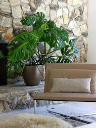 1000 ideas about best indoor plants on pinterest good indoor plants plants and houseplant brisbane office plants