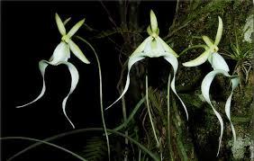 Kết quả hình ảnh cho hoa đẹp có hình dáng kỳ lạ