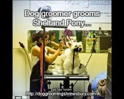 Show Dog Grooming via Relatably.com