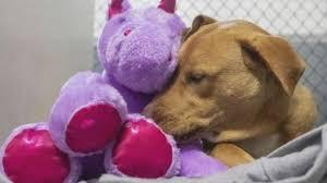 Stray <b>Dog</b> Befriends a <b>Unicorn</b> - YouTube