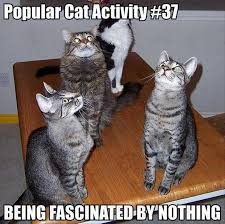 Popular cat activity - Being fascinated by nothing - Memes Comix ... via Relatably.com