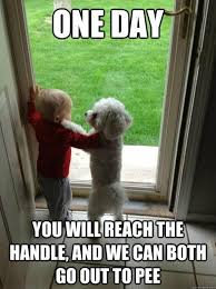 Top-Memes-11-one-day-you-will-reach-the-handle.jpg via Relatably.com