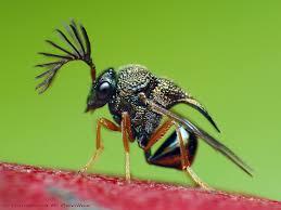 Böcek İlaçlama Firması Güngören