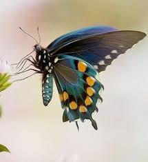 46 Best <b>Butterflies</b> & Bliss images in 2019 | Beautiful <b>butterflies</b> ...