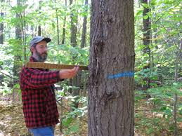 forest based business cooperative extension forests and trees