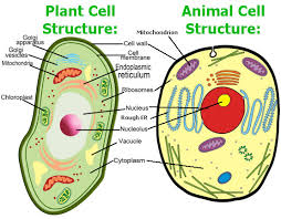Image result for cells