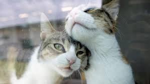 Image result for loving cats