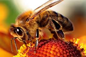 Celebrating the greatest of all pollinators—<b>bees</b>