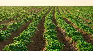 Image result for farming in Nigeria