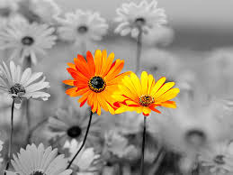 Image result for orange flowers images