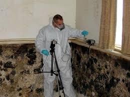 Image result for mold assessment