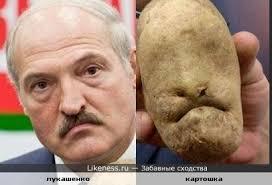 """Лукашенко готов быть посредником между Украиной и РФ, хотя это у него """"в печенках сидит"""" - Цензор.НЕТ 6893"""