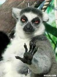 Chill Out Lemur meme funny | Why Are You Stupid? via Relatably.com