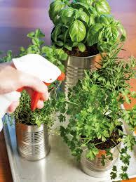 Kitchen Herb Garden Design Grow Your Own Kitchen Countertop Herb Garden Hgtv