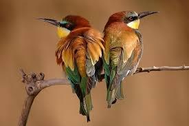 kuş resmi ile ilgili görsel sonucu