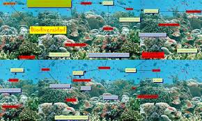 El Mediterráneo y el Caribe necesitan protección de su biodiversidad