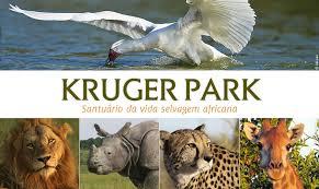 Resultado de imagen de parque nacional kruger