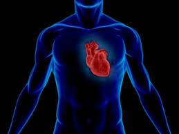 Résultats de recherche d'images pour «Illustration coeur humain»