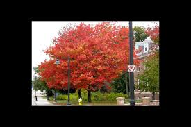 When to prune trees and shrubs? Wait till after the leaves <b>fall</b> ...