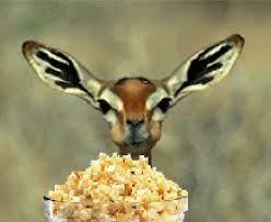 Image result for deer eating popcorn