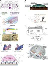 research paper concise review stem cell microenvironment on a figure