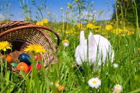Risultati immagini per coniglio pasquale