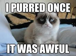 Fun Friday – Angry Cat Memes! | Dusty Crabtree via Relatably.com