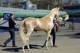 الخيول التركيه من اجمل خيول العالم وولاده حصان سبحان الله Images?q=tbn:ANd9GcR73YXj1aknwJE_pFXMZCjg0EenZ1aathbmM2dLIFX9S9sSx6oCSg