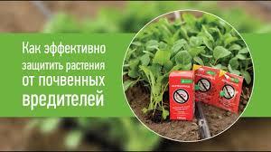 Как эффективно защитить растения от <b>почвенных вредителей</b> ...