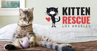 <b>Kitten</b> Rescue • Los Angeles