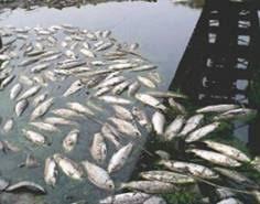 Resultado de imagen para la contaminacion por mercurio