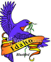 Image result for idaho's state bird