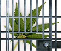 Image result for no jail for pot