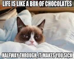 IMAGE | sad cats memes via Relatably.com